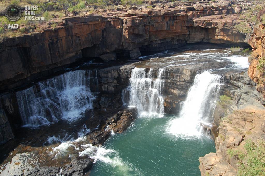 Австралия. Кимберли, Западная Австралия. Водопад Митчелл. (Lentibulariaceae)