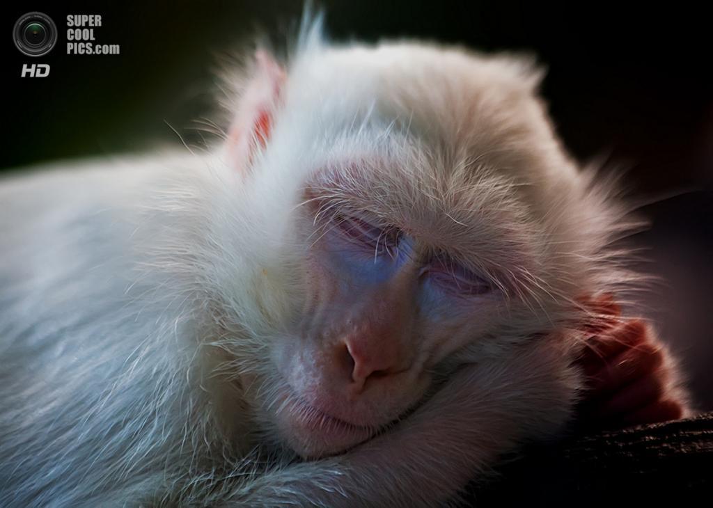 Животные-альбиносы. (George Barker)