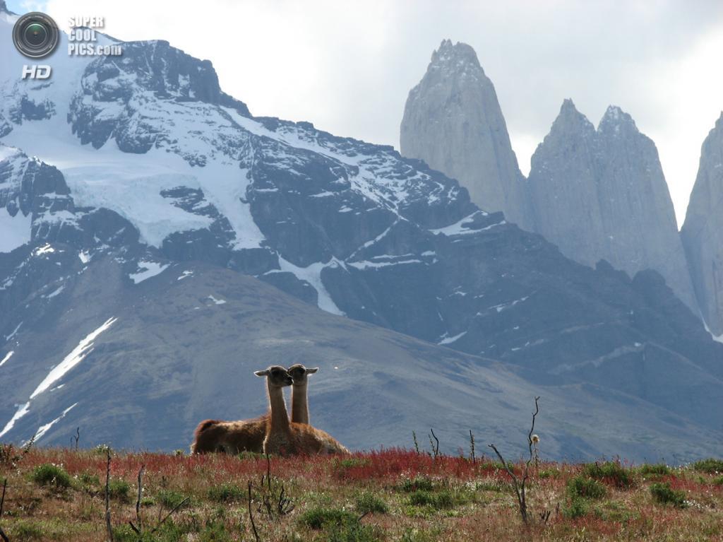 Чили. Национальный парк Торрес-дель-Пайне. (Rafael Mayer)