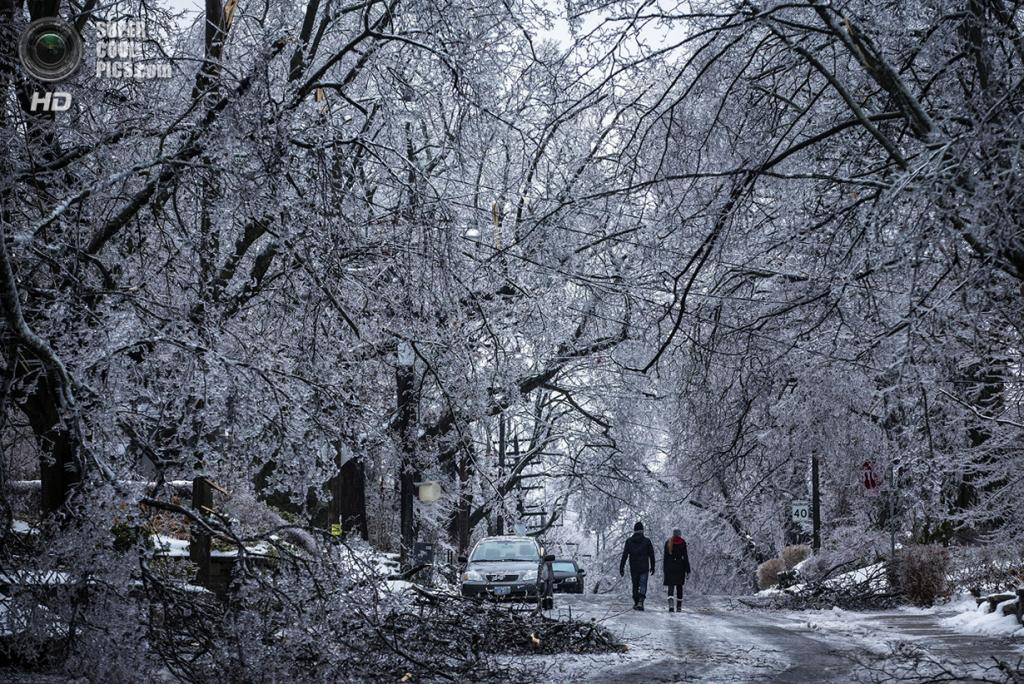 Канада. Торонто, Онтарио. 22 декабря. Поваленные деревья, изморозь и снег — «подарок» от природы на Рождество. (REUTERS/Mark Blinch)