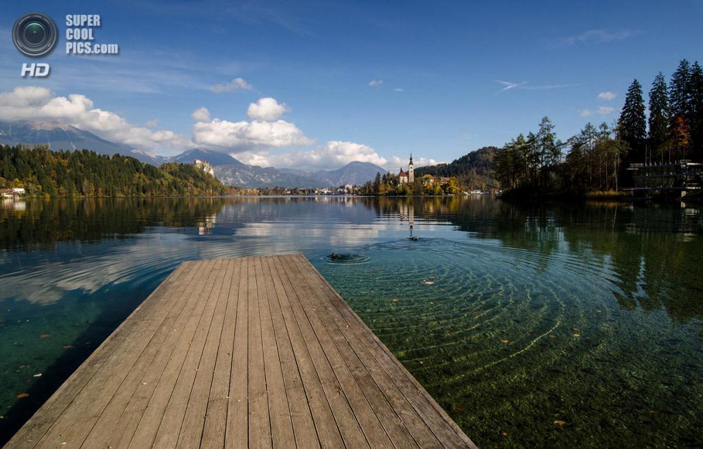 Словения. Крайна. Бледское озеро. (Csilla Zelko)