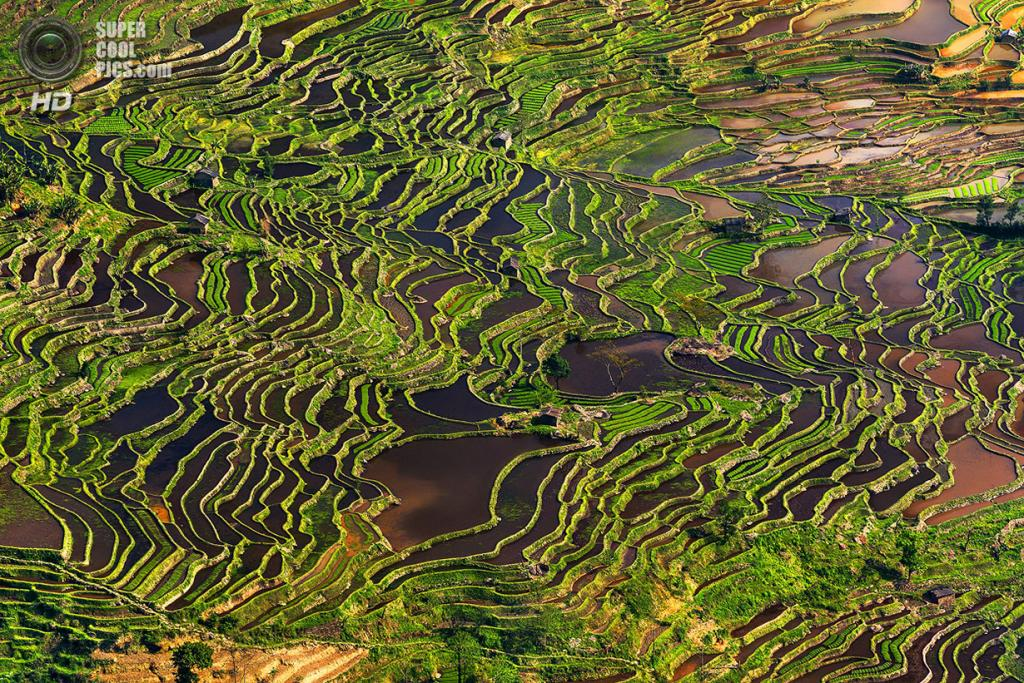 «Террасы рисовых полей». Место съемки: Китай. Юаньян, Юньнань. (Thierry Bornier/National Geographic Photo Contest)