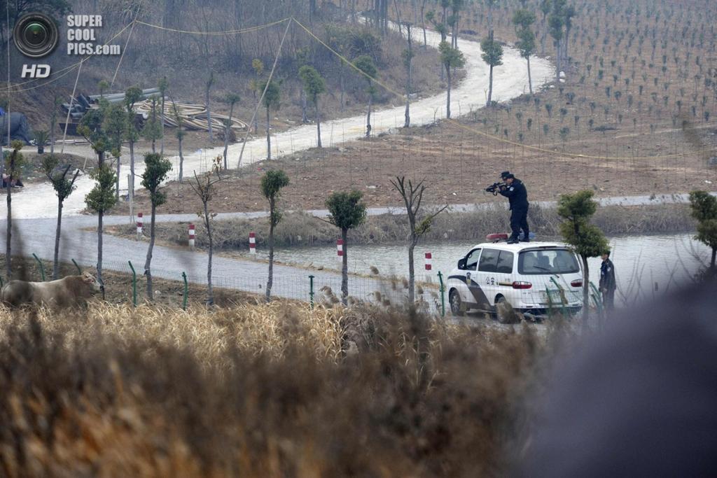 Китай. Шучэн, Аньхой. 15 декабря. Полицейские целятся в корову. (REUTERS/China Daily)