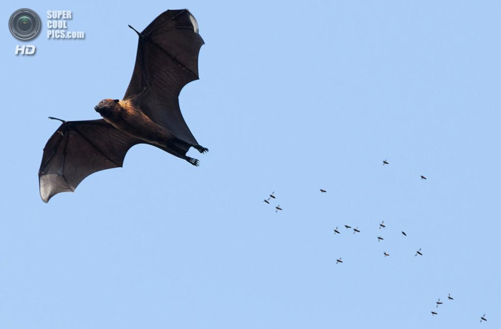 «Погоня». Место съемки: Индия. Лакхимпур, Уттар-Прадеш. (Satpal Singh/National Geographic Photo Contest)