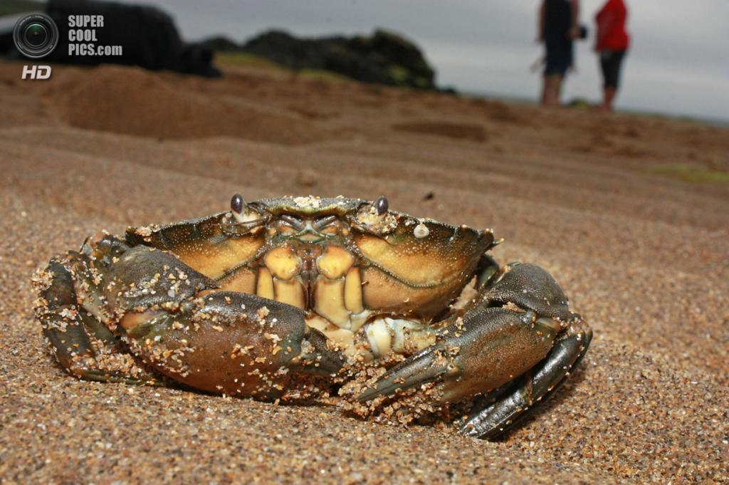 «Незнакомцы на пляже». (Barry Forbes/Scottish Seabird Centre)