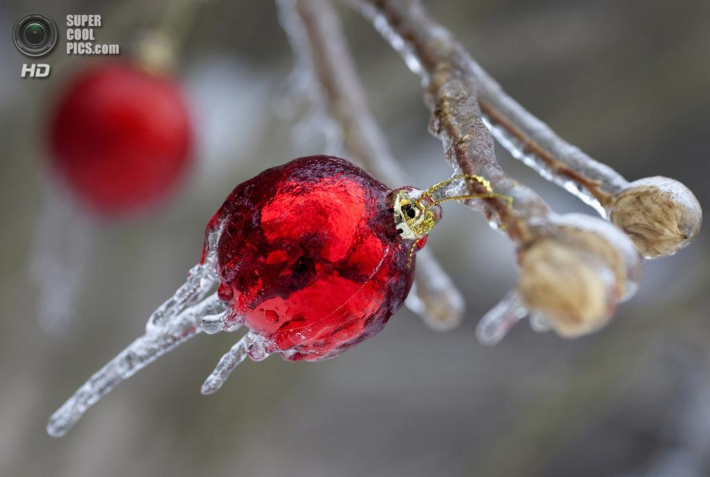 Канада. Торонто, Онтарио. 22 декабря. Рождественские игрушки, покрытые изморозью, на дереве в саду. (REUTERS/Bob Strong)