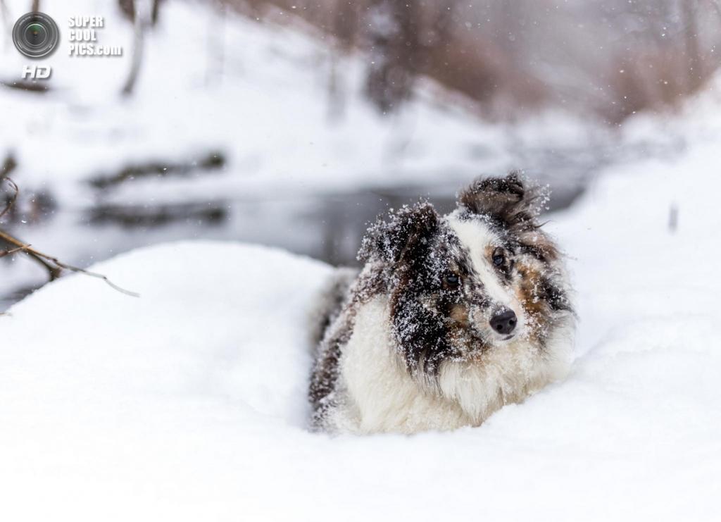 Снег — собачье счастье. (Sean Van dongen)