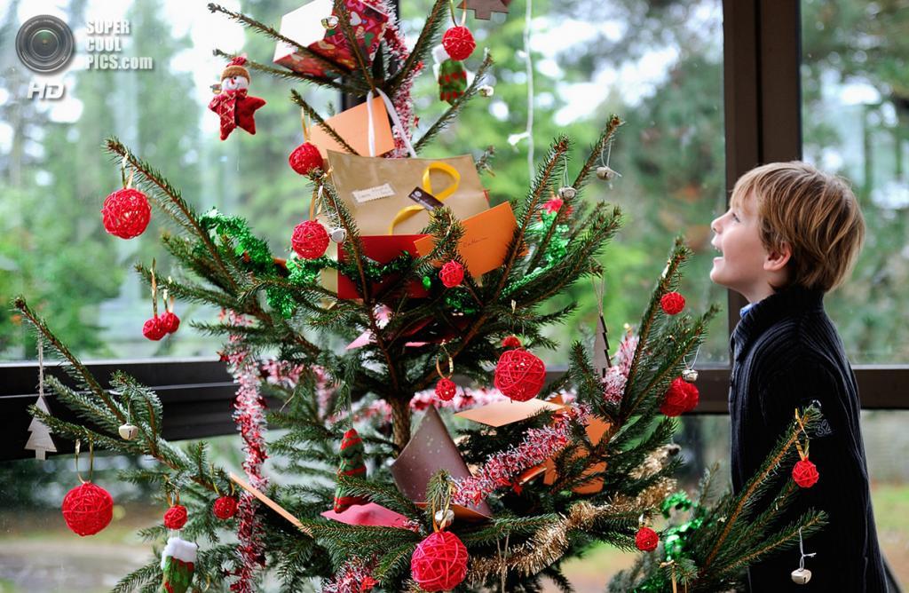 Франция. Динан, Кот-д'Армор, Бретань. 25 декабря. Мальчик рассматривает подарки и пожелания на рождественской ёлке. (Philippe Huguen/AFP/Getty Images)