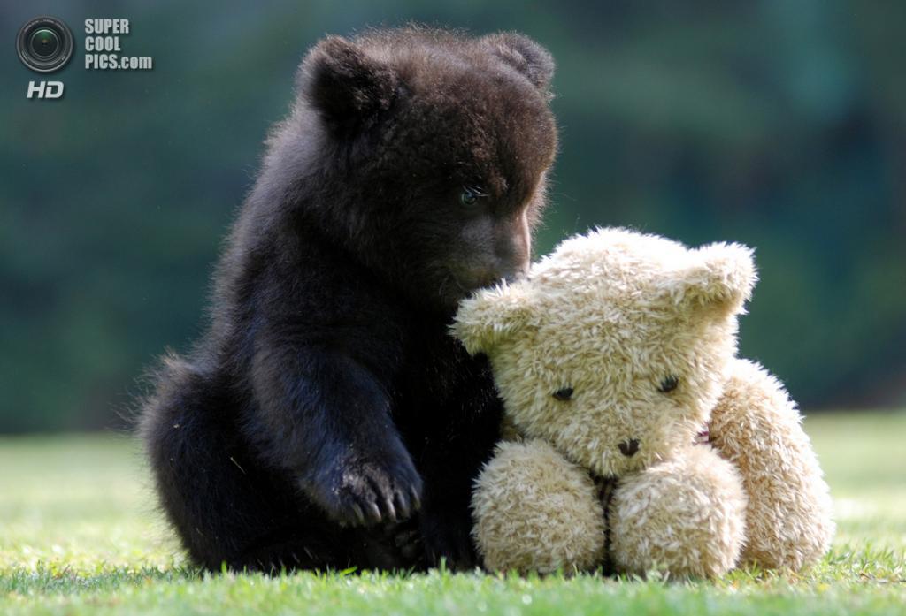 Южная Корея. Йонъин, Кёнгидо. Медведь в зоопарке Эверленд. (In Cherl Kim)