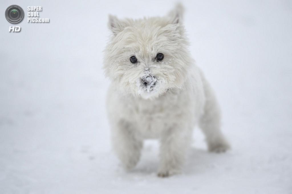 Снег — собачье счастье. (Krzysiek Rabiej)