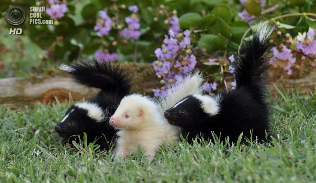 Животные-альбиносы. (Becky Ross McRae)
