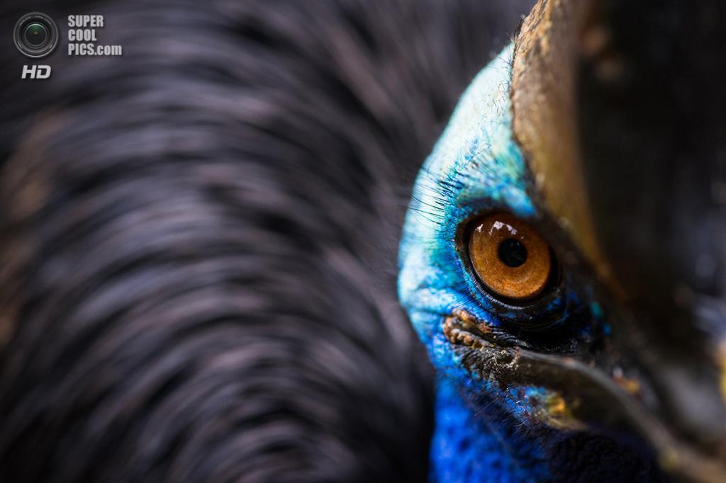 «Любопытный». Место съемки: Индонезия. Джакарта. (Simon Chandra/National Geographic Photo Contest)