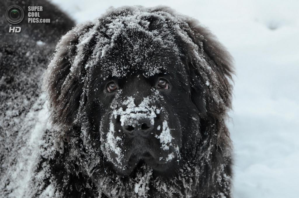 Снег — собачье счастье. (Stefan Matei)