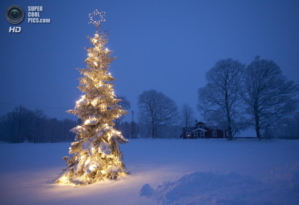 В ожидании Нового года. (Anders Andersson)