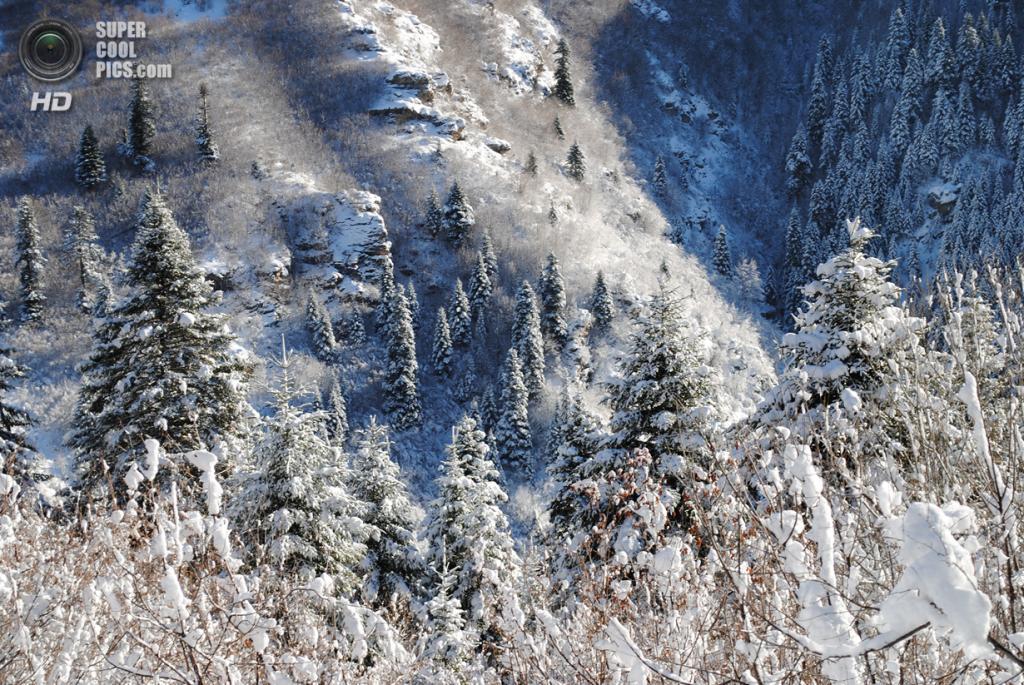 Зимний пейзаж. (aljabak85)