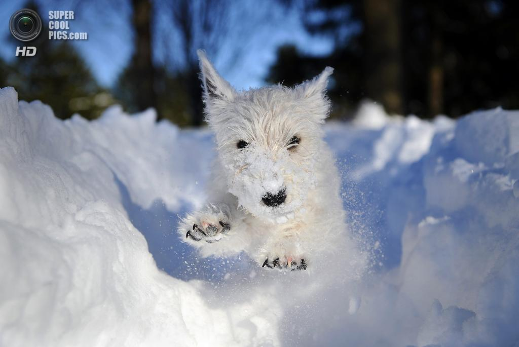 Снег — собачье счастье. (Sam Friedman)