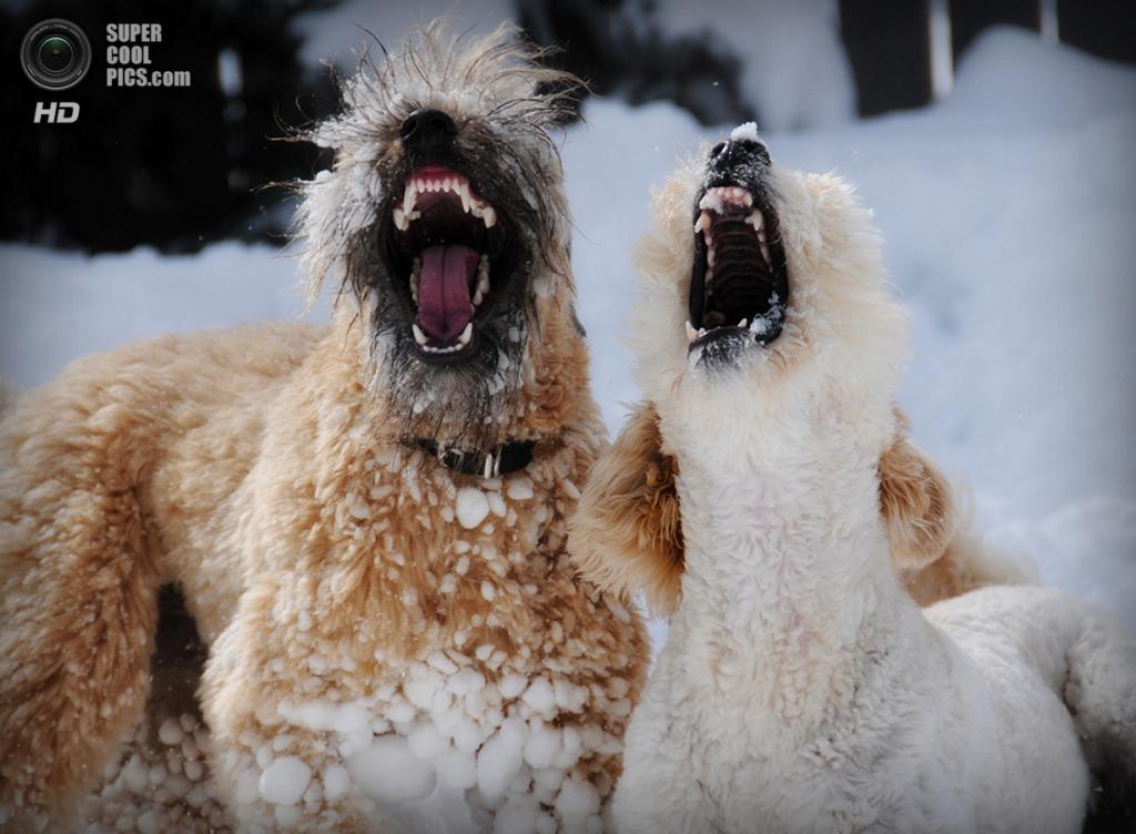 Снег — собачье счастье. (Steve Dueck)