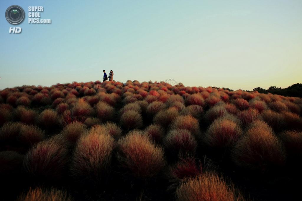«Красный холм». Место съемки: Япония. Хитатинака, Ибараки. (Hideyuki Katagiri/National Geographic Photo Contest)