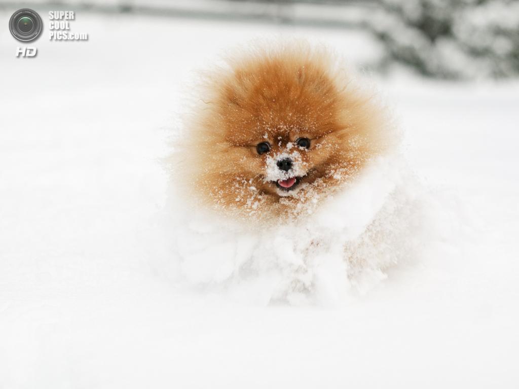 Снег — собачье счастье. (Heidi Dubourgh Pedersen)