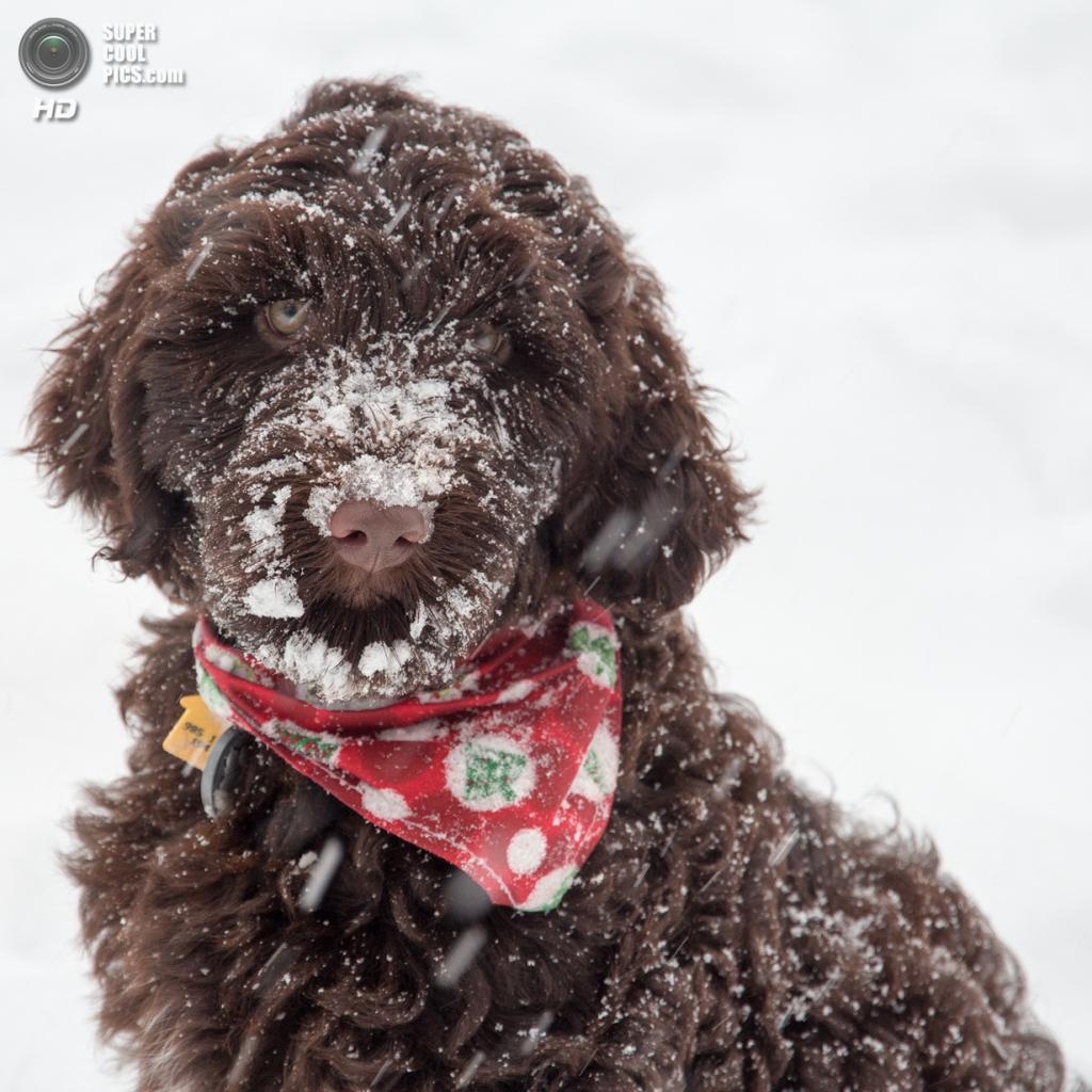 Снег — собачье счастье. (Rob Pipe)