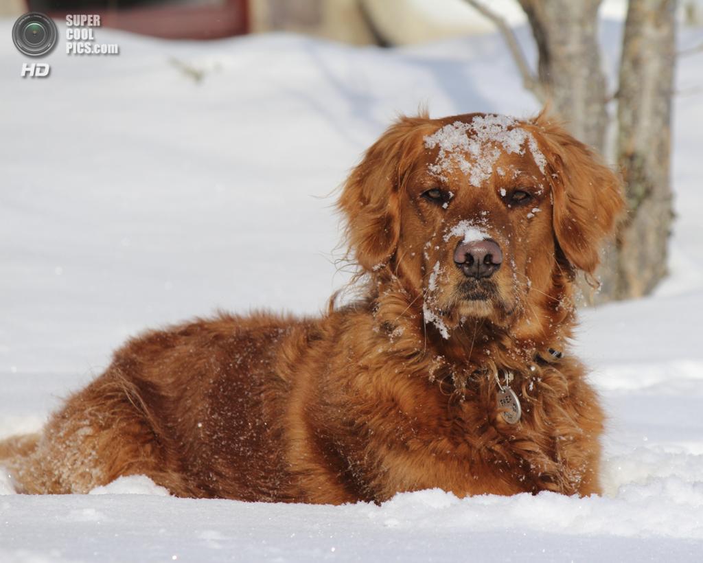 Снег — собачье счастье. (Tom Landretti)
