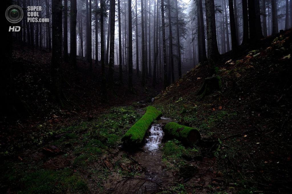«В зарослях». Место съемки: Италия. Национальный парк Форесте-Казентинези, Тоскана. (Stefano Spezi/National Geographic Photo Contest)