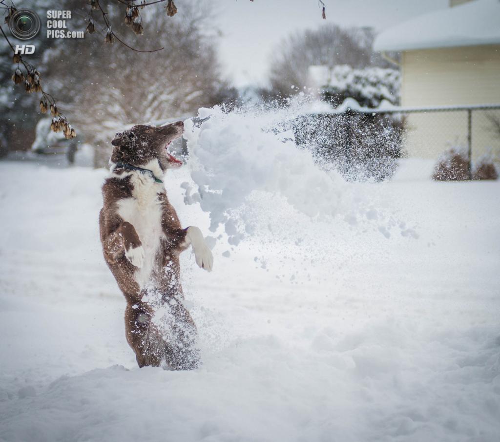 Снег — собачье счастье. (Chris Willis)
