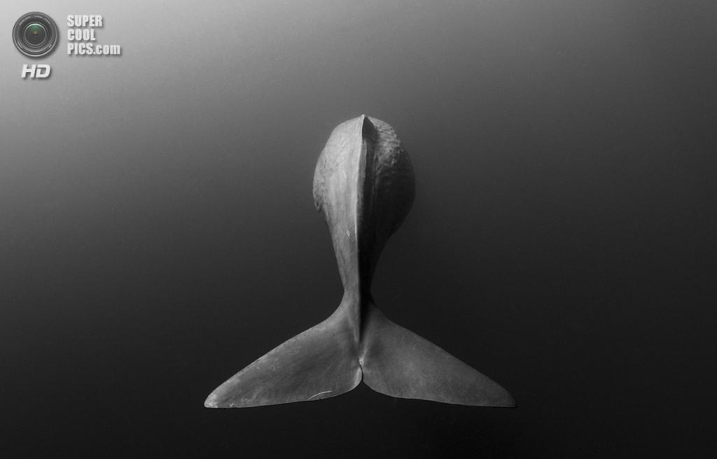 «Прощание». Место съемки: Шри-Ланка. (Shane Gross/National Geographic Photo Contest)