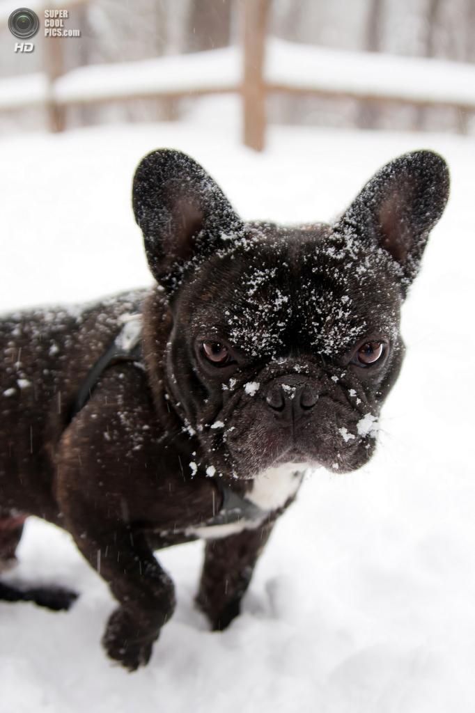 Снег — собачье счастье. (Little Ms Laura)