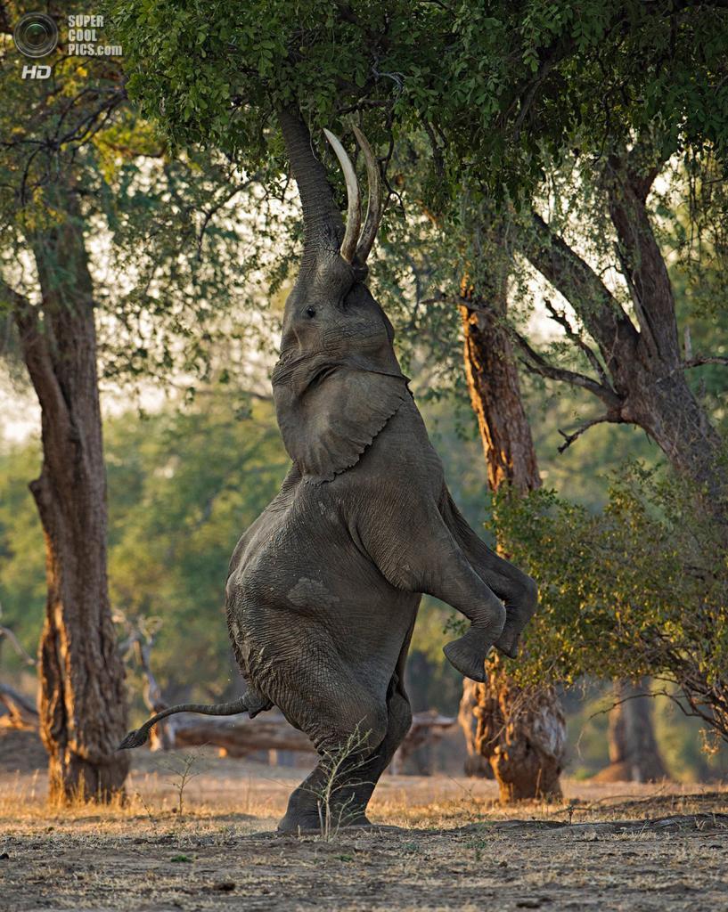 «Отличный баланс». Место съемки: Зимбабве, Национальный парк Мана-Пулс, Западный Машоналенд. (Morkel Erasmus/National Geographic Photo Contest)