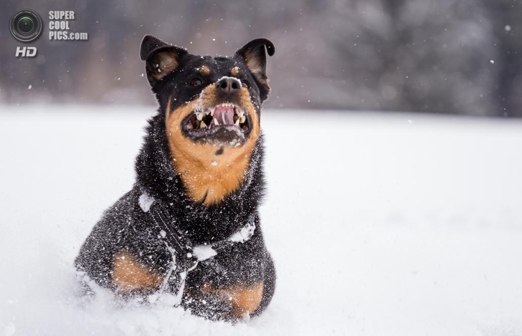 Снег — собачье счастье. (Franz Lüdicke)