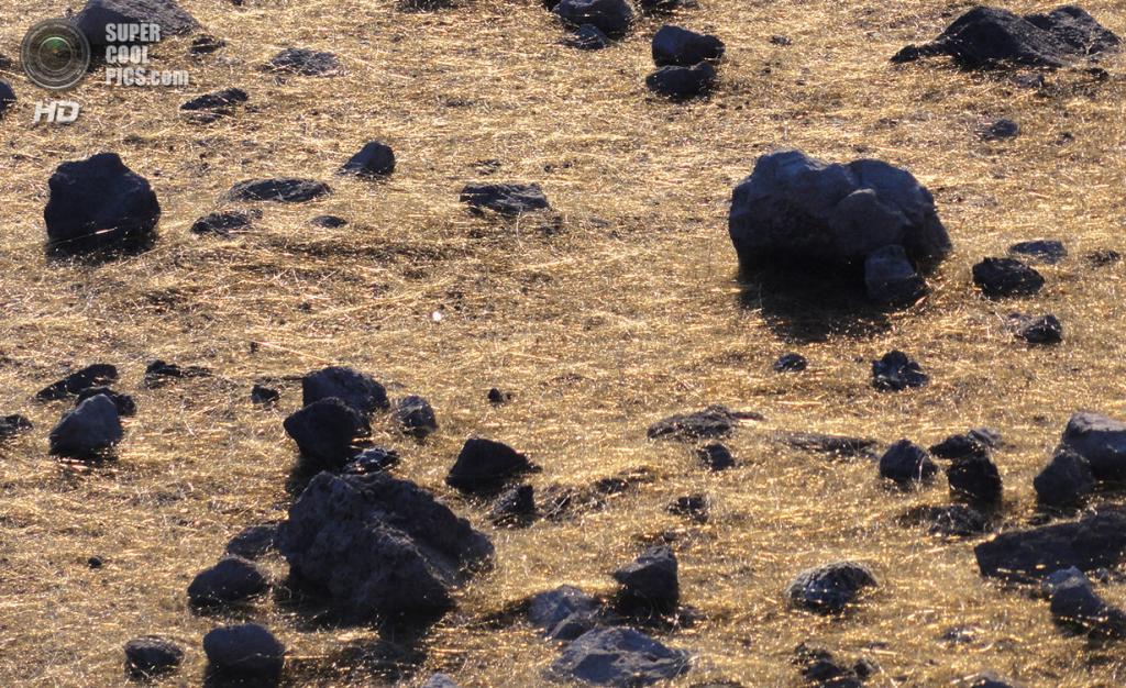 США. Гавайи. «Волосы Пеле» — нити закалённого вулканического стекла, сформировавшиеся во время извержения вулкана Килауэа. (USGS/Hawaiian Volcano Observatory)