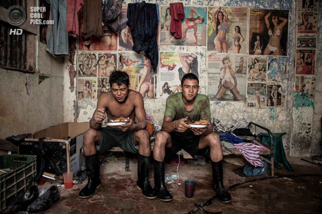 «Золотодобытчики». Место съемки: Коста-Рика. Гуанакасте. (Guillermo Barquero/National Geographic Photo Contest)