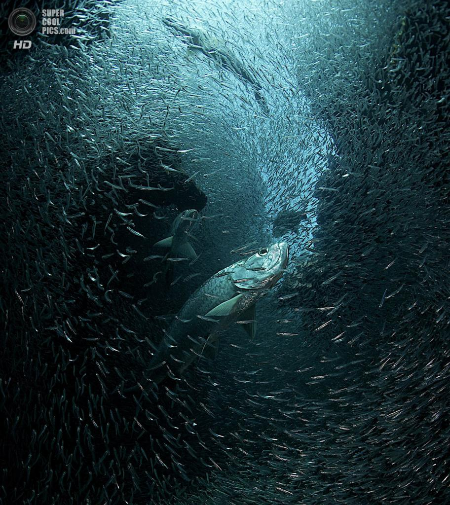 «Любовь к лету». Место съемки: Каймановы острова. (Ellen Cuylaerts/National Geographic Photo Contest)