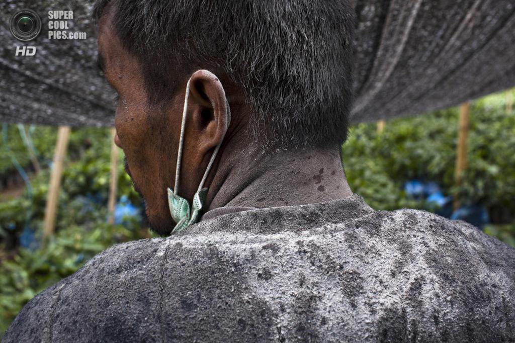 Индонезия. Гуру-Кинаян, Северная Суматра. 21 ноября. Фермер в вулканическом пепле после извержения вулкана Синабунг. (Ulet Ifansasti/Getty Images)