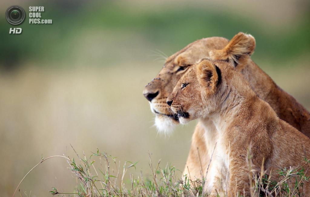 «Поколения». Место съемки: Кения. Заповедник Масаи-Мара, Рифт-Валли. (Mark Bridger/National Geographic Photo Contest)