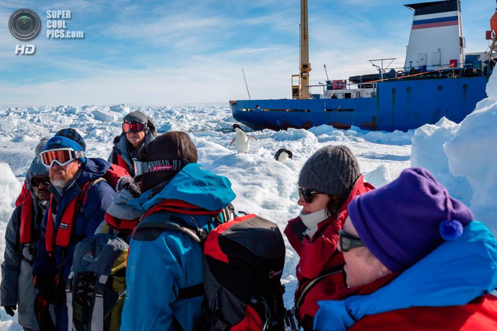 Антарктида. Эвакуация пассажиров с судна «Академик Шокальский». (Andrew Peacock/AFP PHOTO)