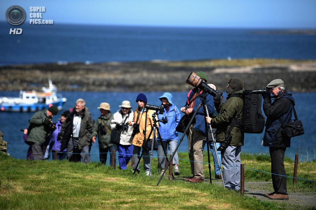Великобритания. Фарне, Нортамберленд, Англия. 16 мая 2013 года. Туристы фотографируют птиц, прилетающих на летние гнездовья на острова Фарне. (Jeff J Mitchell/Getty Images)