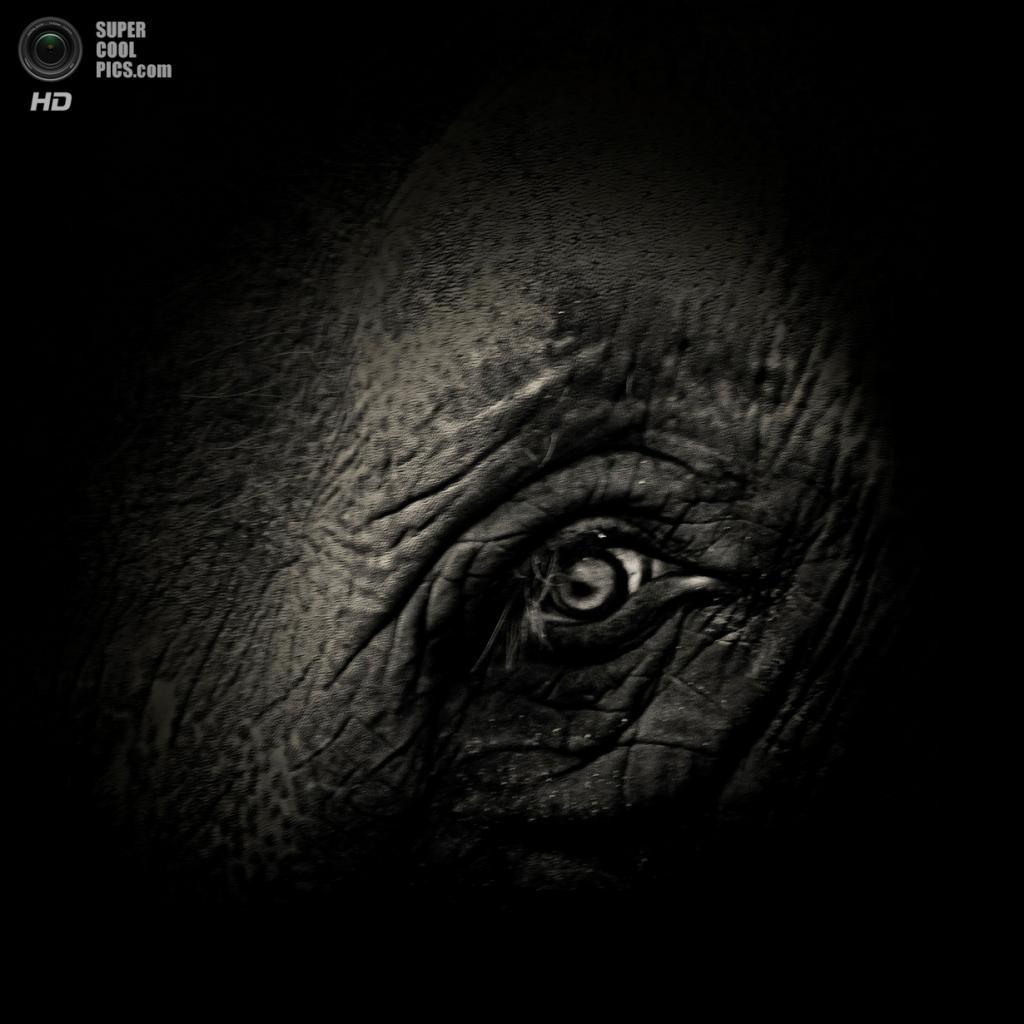 Азиатский слон. (AlexTeuscher/BNPS)