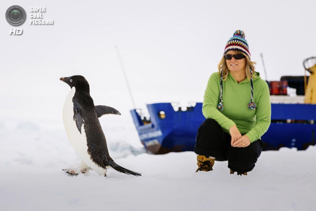 Антарктида. Барбара Такер рассматривает пингвина. (Andrew Peacock/AFP PHOTO)
