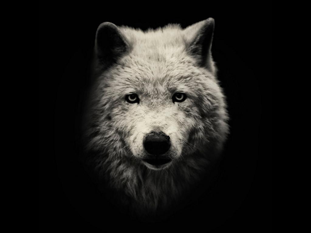 Чёрно-белые портреты редких животных (10 фото)