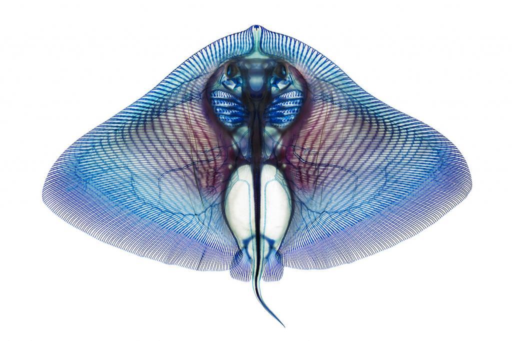 Водные животные на просвет (4 фото)