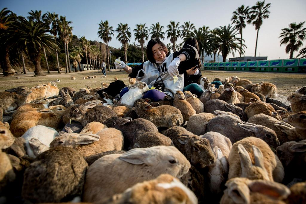 Остров кроликов со зловещим прошлым (15 фото)