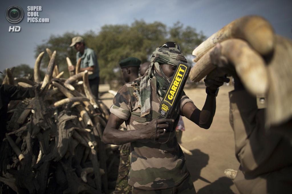 Чад. Гоз-Джарат, Саламат. 21 февраля. Солдат ищет взрывчатку в складываемых для сожжения слоновьих бивнях. (MARCO LONGARI/AFP/Getty Images)