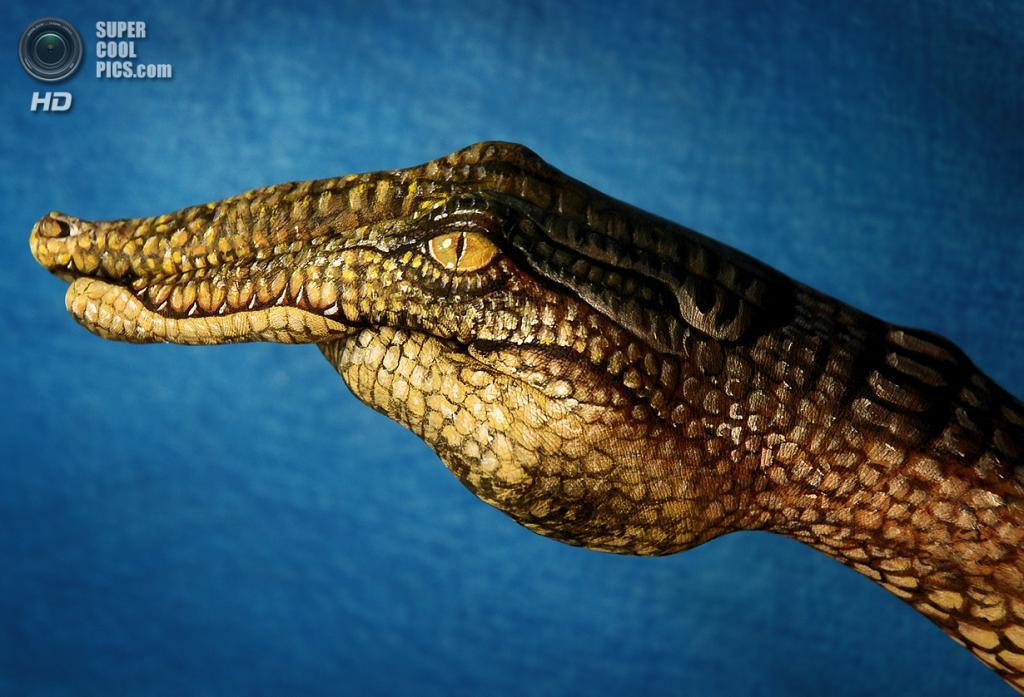 Крокодил. (Guido Daniele)