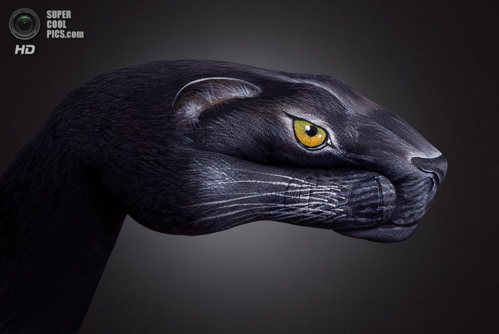 Чёрная пантера. (Guido Daniele)
