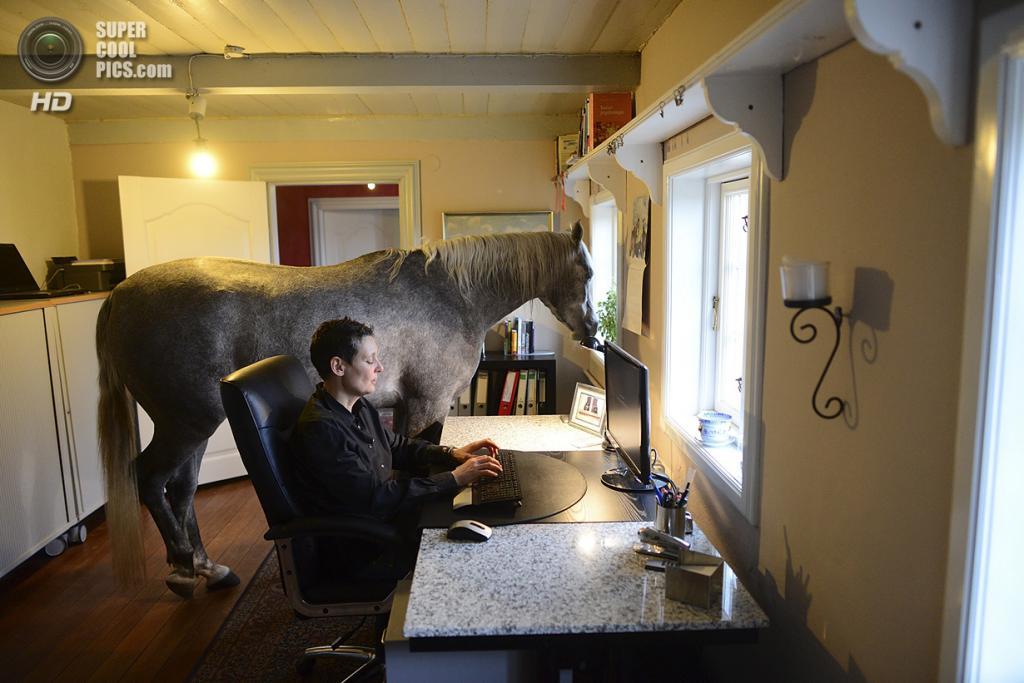 Германия. Хольт, Шлезвиг-Гольштейн. 19 февраля. Назар изучает календарь в офисе Стефани. (Patrick Lux/Getty Images)