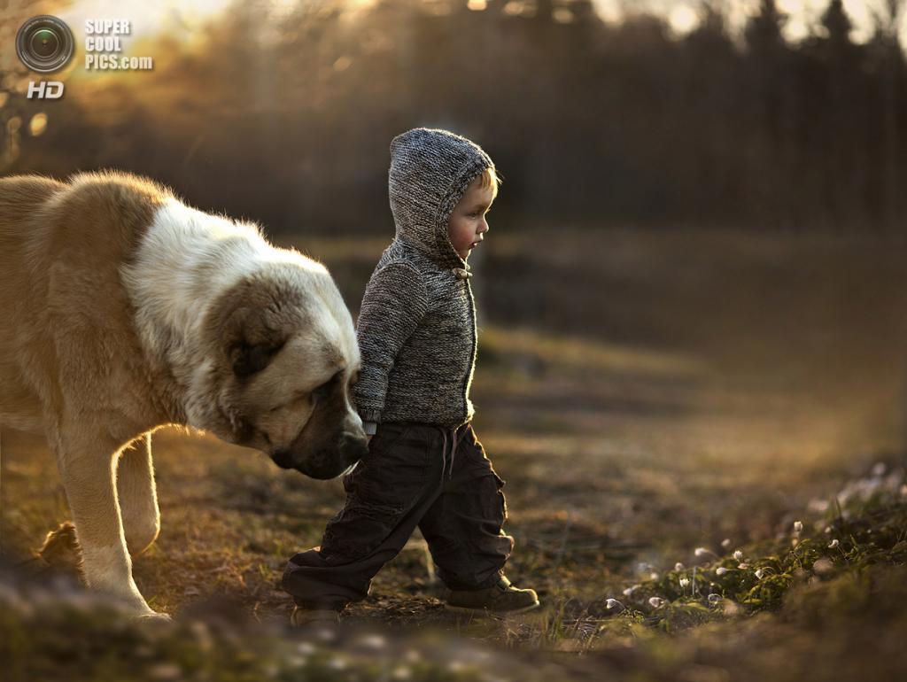 Followed... (Elena Shumilova)