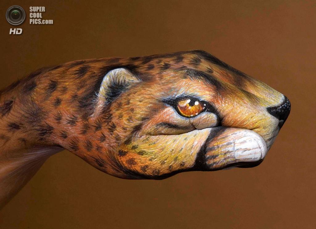 Леопард. (Guido Daniele)