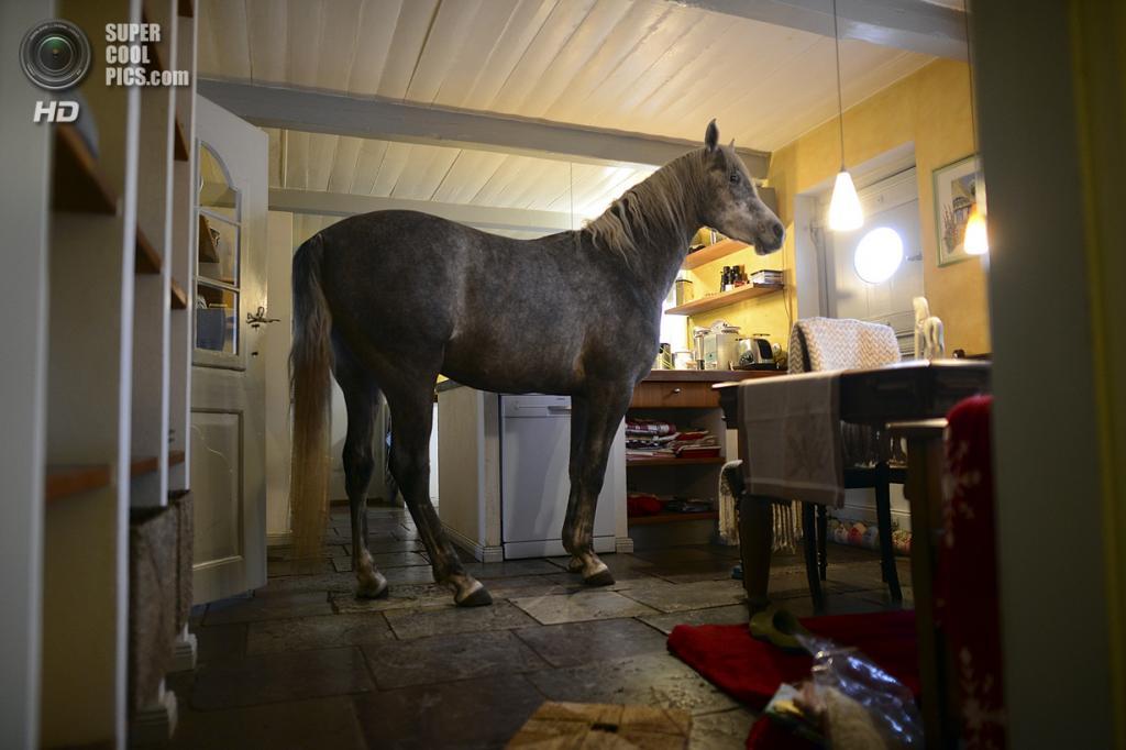 Германия. Хольт, Шлезвиг-Гольштейн. 19 февраля. Любимое место Назара — кухня. (Patrick Lux/Getty Images)